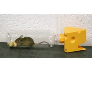 Pestrol Catch a Mouse Humane Trap