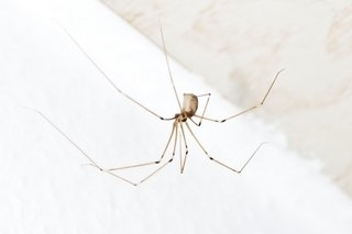 Spider Control Products