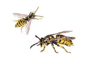 Wasp Control Products